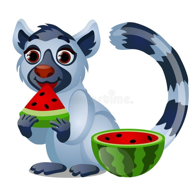 Netter Maki, der eine reife saftige Wassermelone lokalisiert auf weißem Hintergrund isst Vektorkarikatur-Nahaufnahmeillustration lizenzfreie abbildung