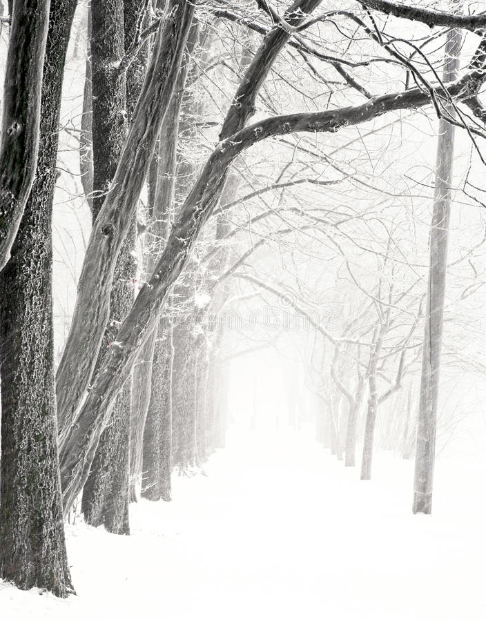 Netter Park im Winter lizenzfreie stockfotos