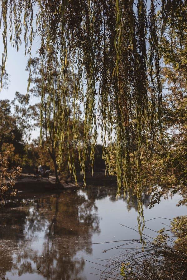 Netter Park mit einem See und vielen Vegetation stockfoto