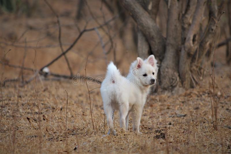 Netter parmenion Hund, der im Park von Indien spielt lizenzfreie stockbilder