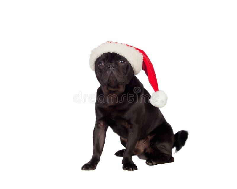 Netter Pug carlino Hund mit Weihnachtshut lizenzfreie stockbilder