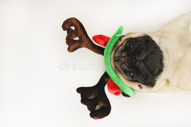 Netter Pug in den Weihnachtshörnern lizenzfreie stockfotografie