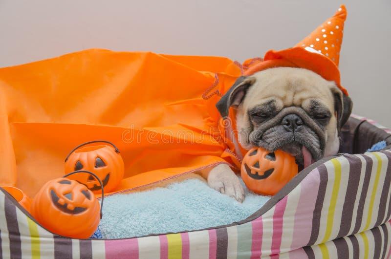 Netter Pughund mit Kostüm des glücklichen Halloween-Tagesschlafrestes legen auf Bett mit Plastikkürbis nieder lizenzfreie stockfotos