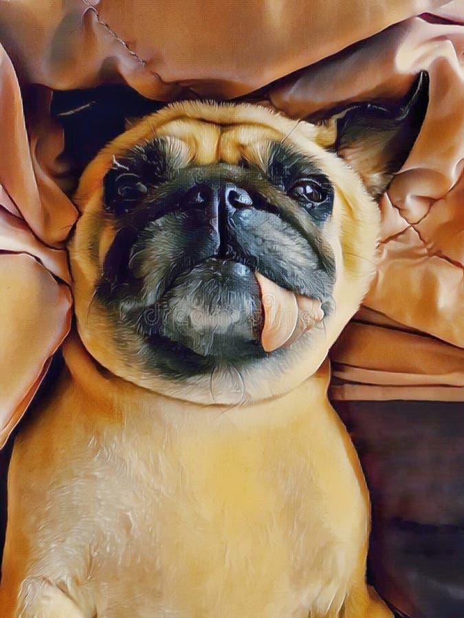 Netter Pughundewelpen-Schlafrest auf Bett mit der Zunge, die heraus haftet stockfotos