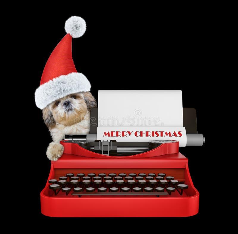 Netter Sankt-shitzu Hund schreibt auf einer Schreibmaschinentastatur Lokalisiert auf Schwarzem stockfotos