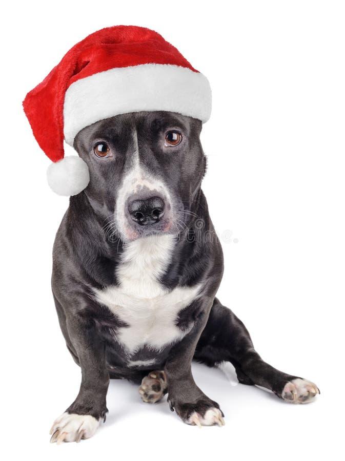 Netter schwarzer Hund mit Sankt-Hut lizenzfreie stockfotos