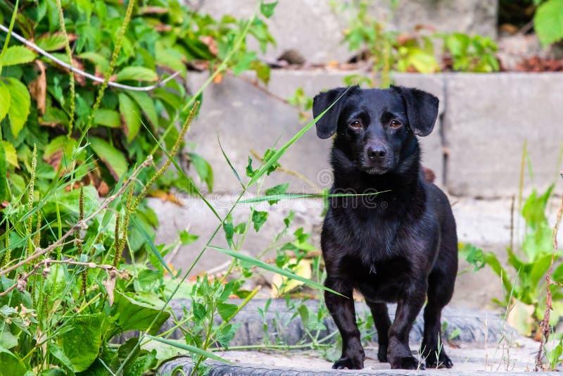 Netter schwarzer Hund steht drau?en in der Natur lizenzfreie stockbilder