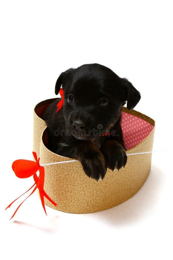 Netter schwarzer Welpe in einer Geschenkbox in Form eines Herzens lizenzfreies stockfoto