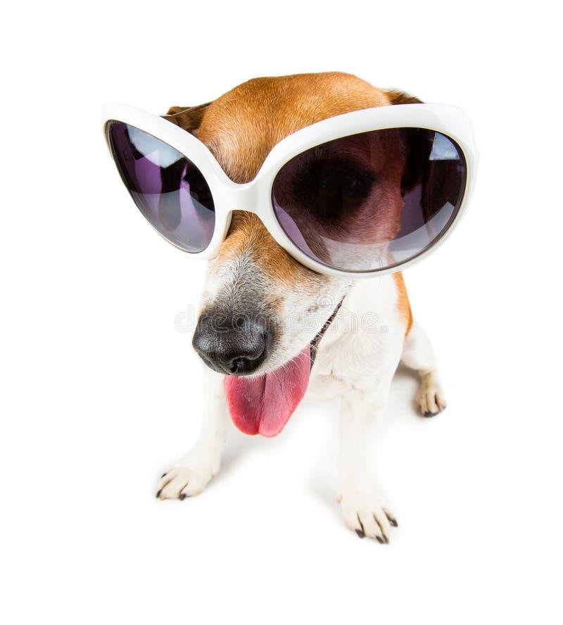 Netter Sonnenbrillehund stockbilder