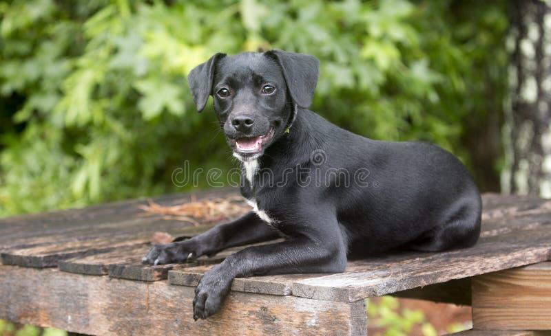 Netter Spürhund-Terrier-Dachshund mischte Zuchthündchen draußen auf Leine lizenzfreie stockfotografie