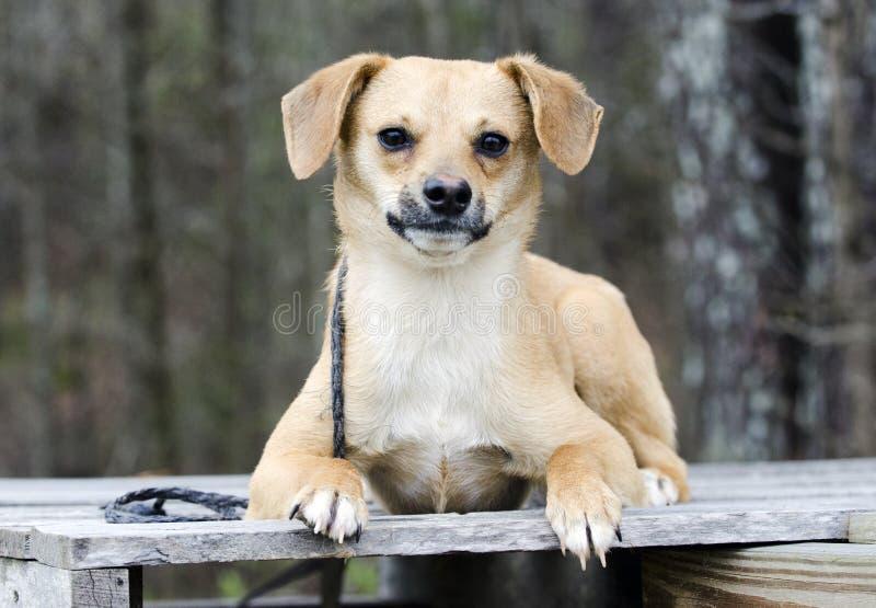 Netter Spürhund Terrier mischte das Zuchthündchen, das auf eine Palette legt lizenzfreie stockfotografie