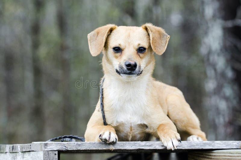 Netter Spürhund Terrier mischte das Zuchthündchen, das auf eine Palette legt lizenzfreie stockfotos