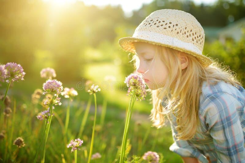 Netter tragender bewundern hoher purpurroter Knoblauch des Strohhutes des kleinen Mädchens blüht am sonnigen Sommertag Kind und B lizenzfreie stockfotos