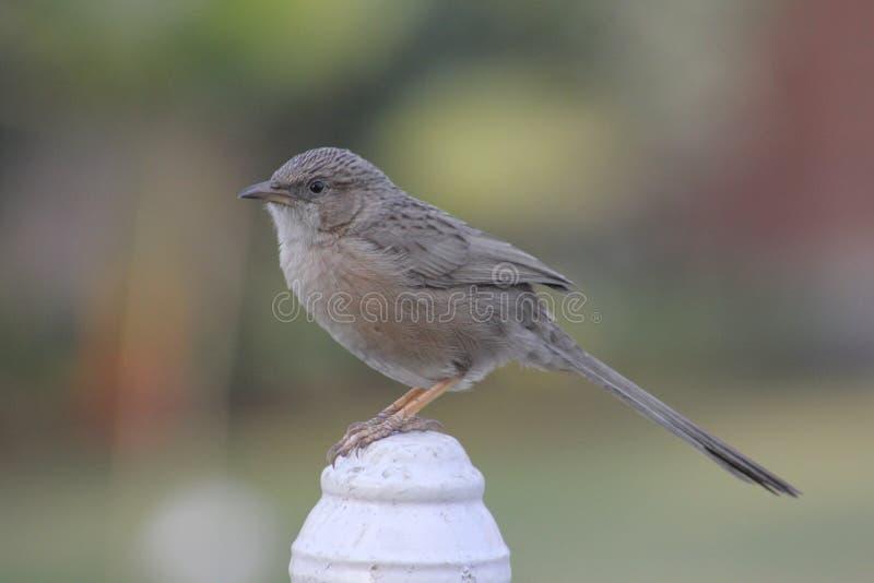Netter Vogel, der auf einem Stein stillsteht lizenzfreie stockbilder