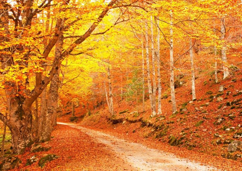 Netter Wald im Herbst lizenzfreies stockfoto