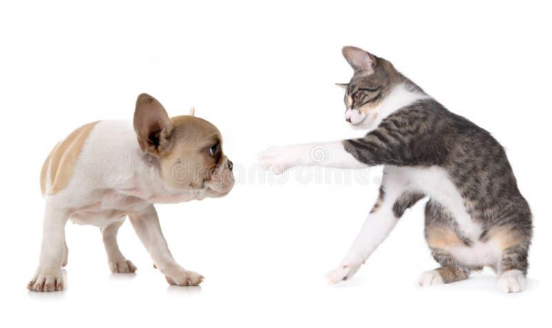 Netter Welpen-Hund und Kätzchen auf Weiß stockbilder