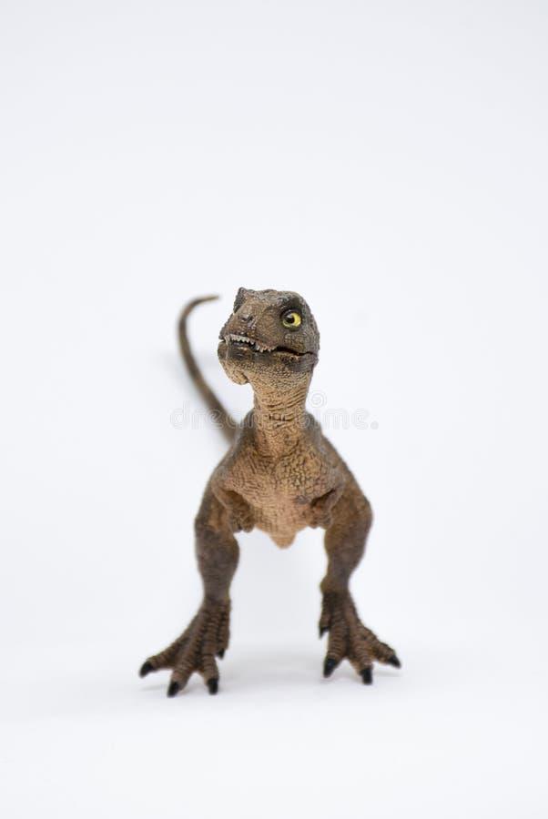 Nettes Baby turannosaurus rex auf weißem Hintergrund lizenzfreies stockfoto