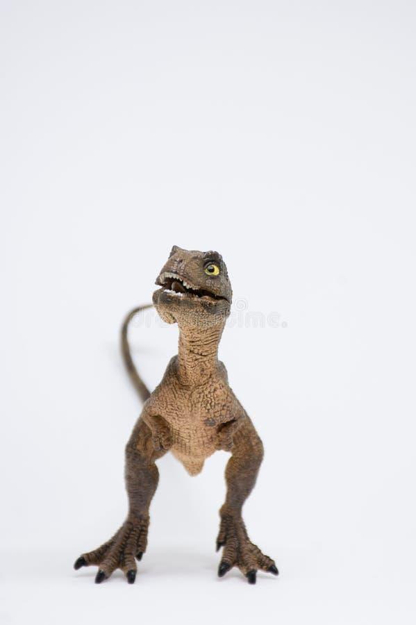 Nettes Baby turannosaurus rex auf weißem Hintergrund lizenzfreie stockbilder