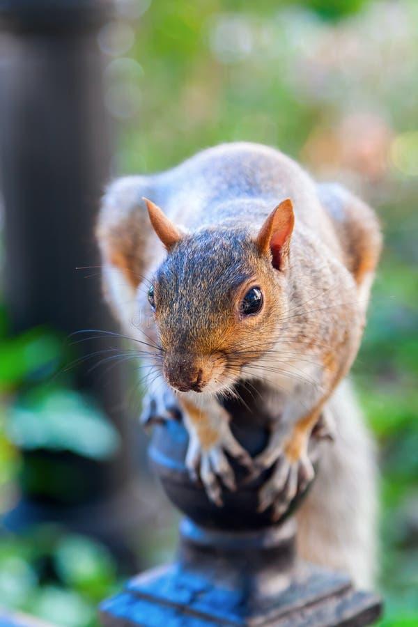 Nettes Eichhörnchen lizenzfreie stockfotos