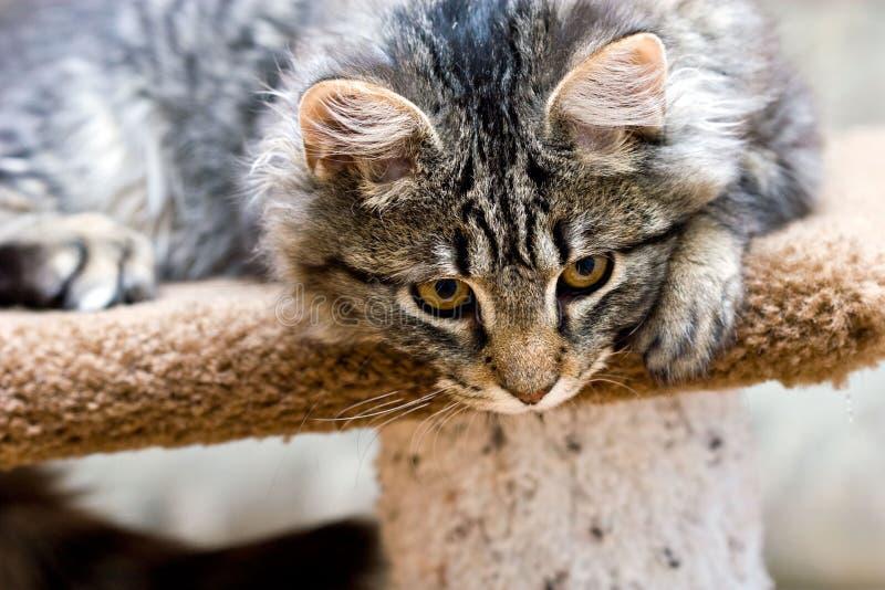 Nettes entzückendes Kätzchenspielen der schönen Katze stockbilder