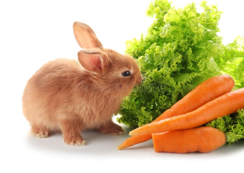 Nettes flaumiges Häschen mit Kopfsalat und Karotten auf weißem Hintergrund stockbild