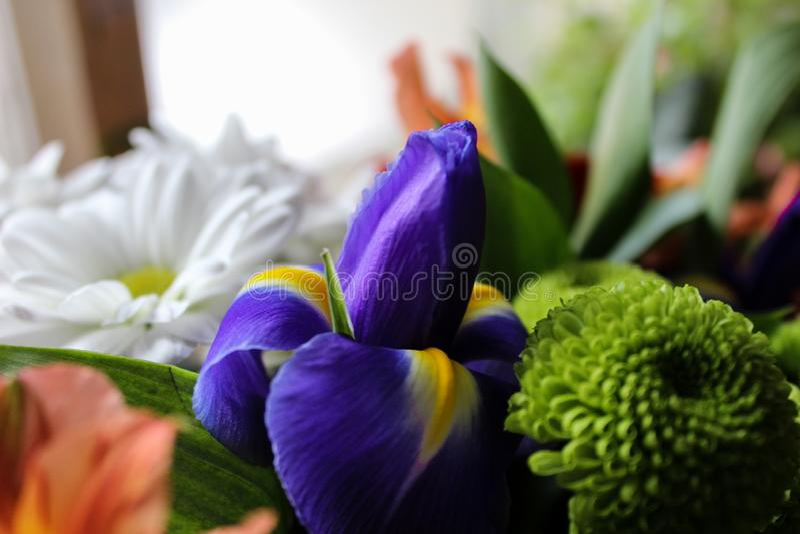 Nettes Foto von Blumen stockfotografie