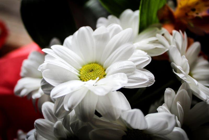 Nettes Foto von Blumen stockfotos