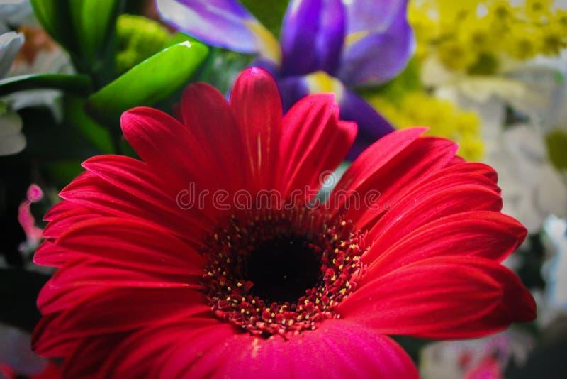 Nettes Foto von Blumen stockbild