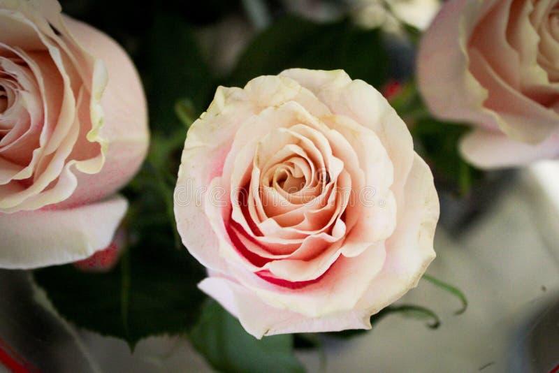 Nettes Foto von Blumen lizenzfreies stockbild