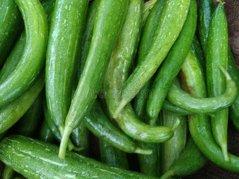 nettes Gemüse in den ländlichen Gebieten lizenzfreies stockfoto
