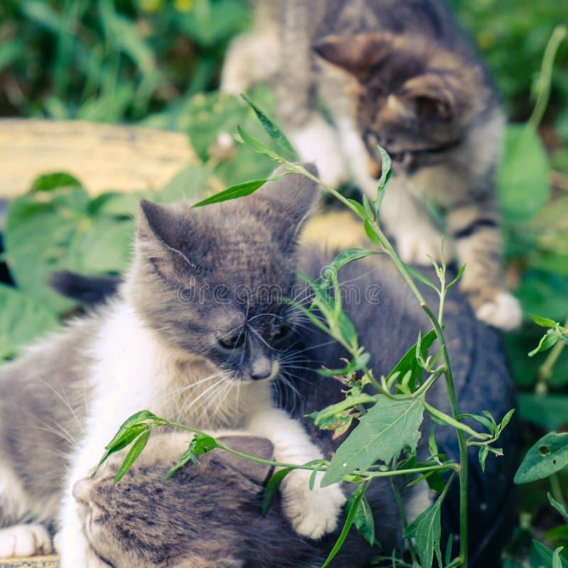 Nettes Haustier des K?tzchenkatzen-Umherirrenders Allein stockbilder