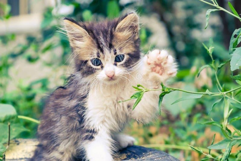 Nettes Haustier des K?tzchenkatzen-Umherirrenders Babyarmen stockfoto