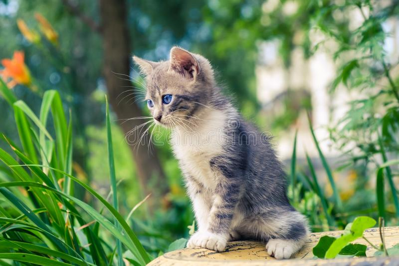 Nettes Haustier des K?tzchenkatzen-Umherirrenders entzückendes im Freien stockbilder