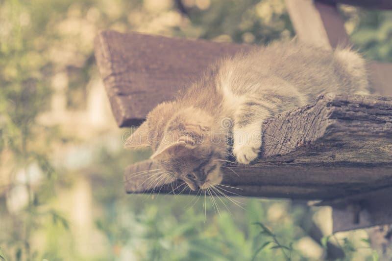 Nettes Haustier des K?tzchenkatzen-Umherirrenders Entz?ckendes kleines stockfotos