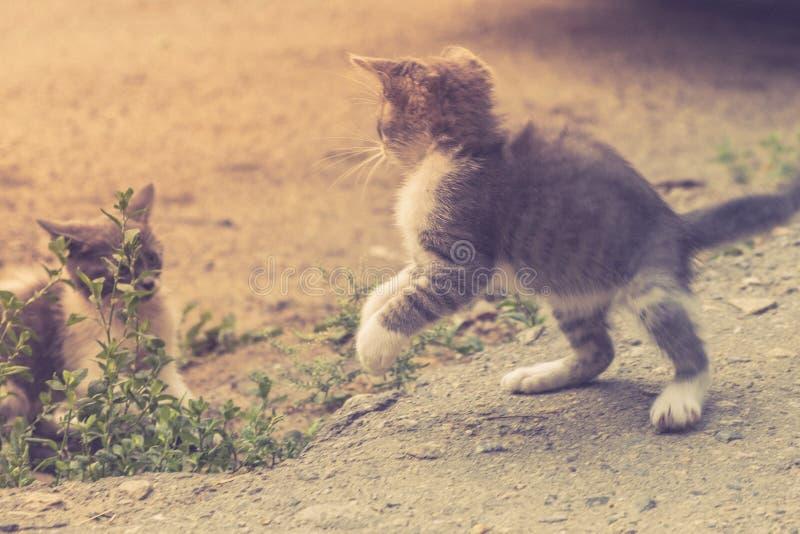 Nettes Haustier des K?tzchenkatzen-Umherirrenders Entz?ckendes Sch?tzchen lizenzfreies stockbild