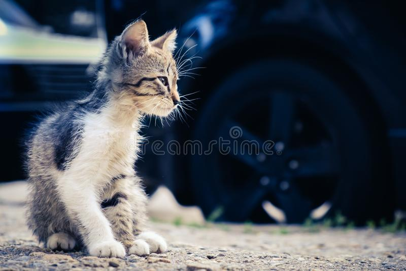 Nettes Haustier des K?tzchenkatzen-Umherirrenders inländisches allein stockfotografie