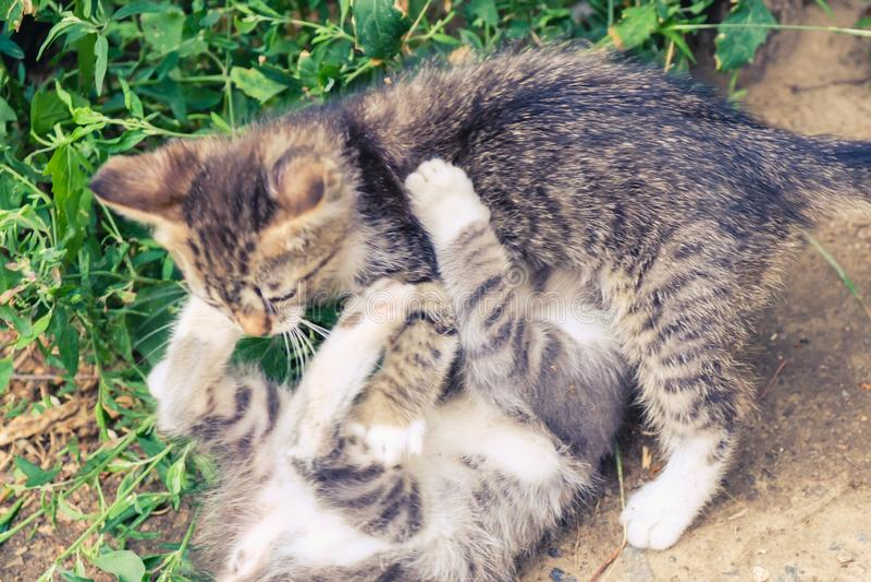 Nettes Haustier des K?tzchenkatzen-Umherirrenders kitty lizenzfreie stockbilder
