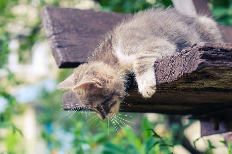 Nettes Haustier des K?tzchenkatzen-Umherirrenders kleiner Obdachloser stockbilder