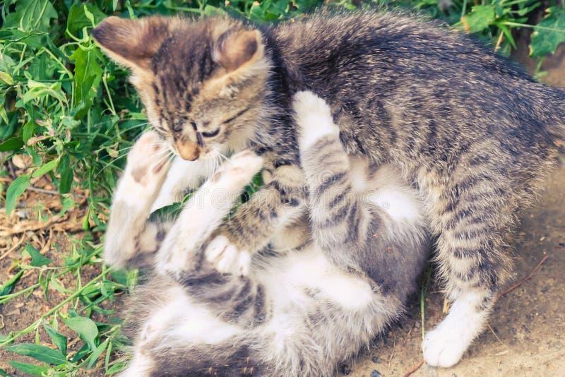 Nettes Haustier des K?tzchenkatzen-Umherirrenders schlecht lizenzfreie stockfotografie