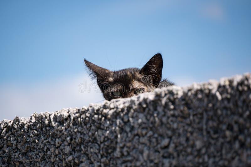 Nettes junges Kätzchen der getigerten Katze, das von hinten eine Wand späht stockfotos
