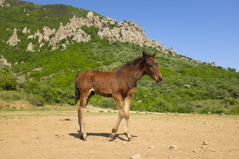 Nettes junges Pferd am Fu? des Berges Fohlen steht vor Demergy-Berg am sonnigen Fr?hlingstag stockfotografie