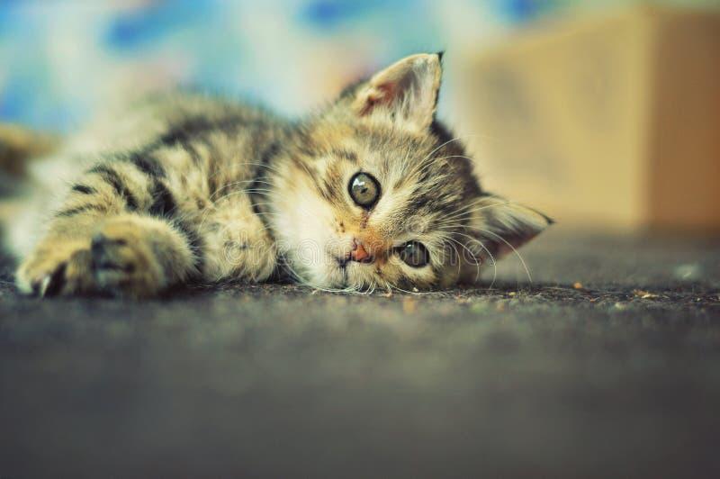 Nettes Kätzchen, das draußen im Garten liegt lizenzfreie stockfotografie