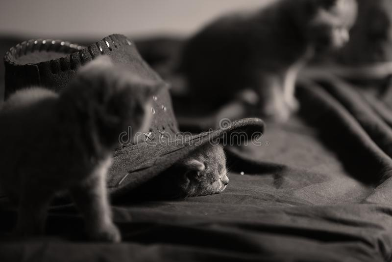 Nettes Kätzchen, das unter dem Hut sitzt stockfoto