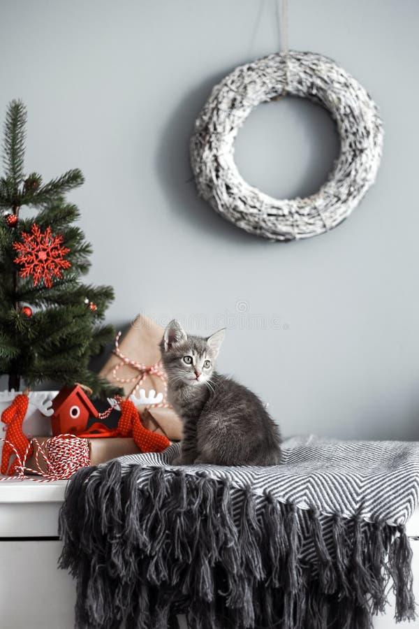 Nettes Kätzchen in einer Weihnachtsdekoration im Rot stockbild