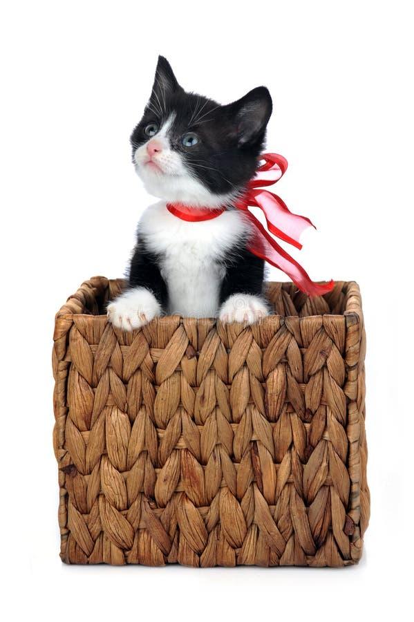 Nettes Kätzchen innerhalb des Kastens stockfoto