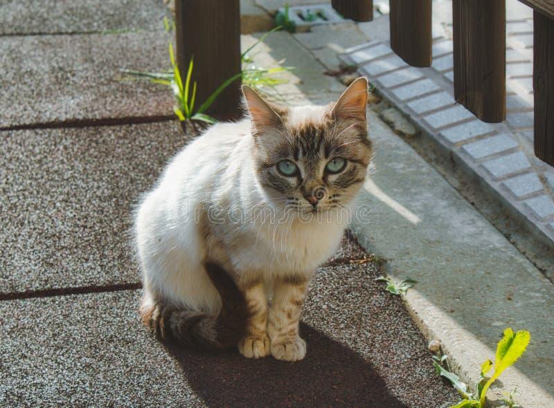 Nettes Kätzchen mit den blauen Augen, welche draußen die Kamera betrachten stockbild