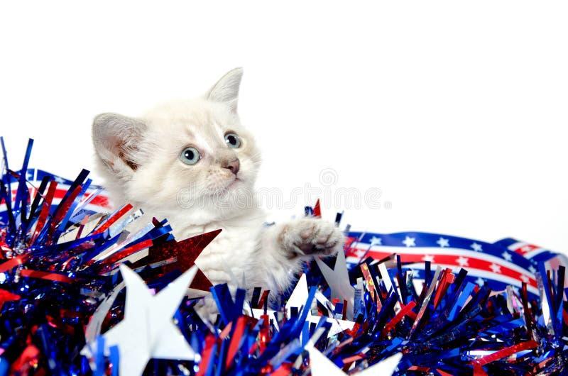 Nettes Kätzchen mit Viertel der Juli-Dekorationen lizenzfreie stockbilder