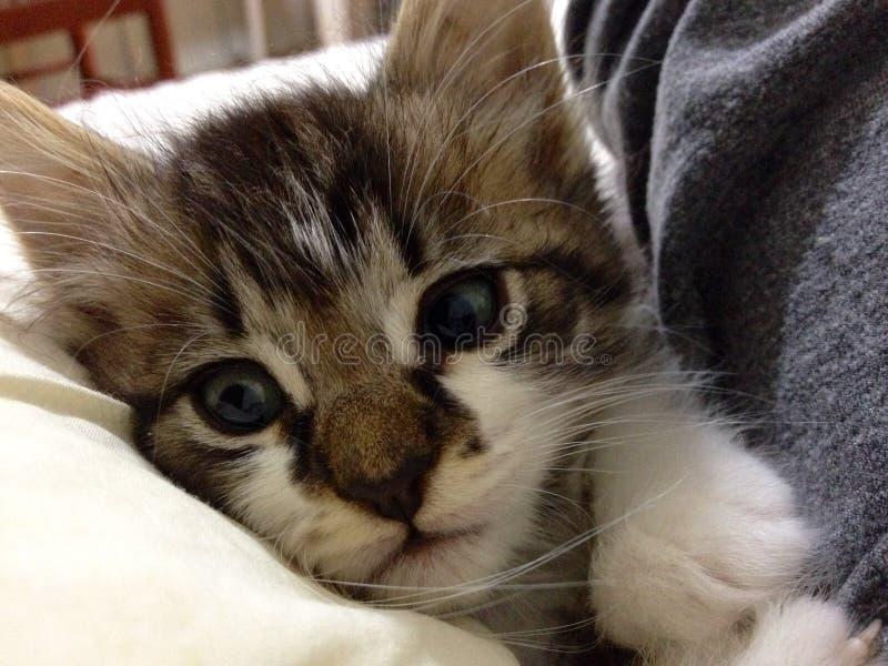 Nettes Kätzchenstillstehen stockbilder
