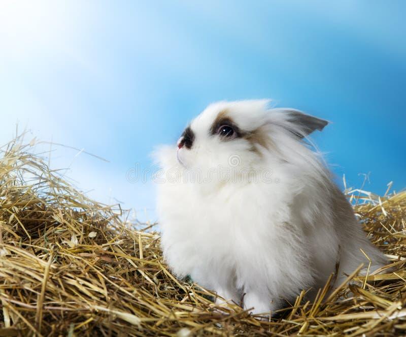 Nettes Kaninchen lizenzfreie stockfotografie