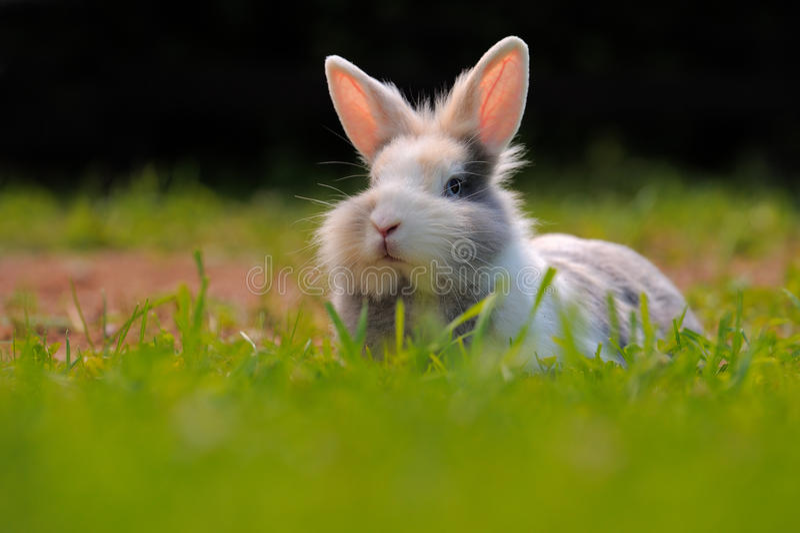 Nettes Kaninchen auf grünem Gras stockfoto